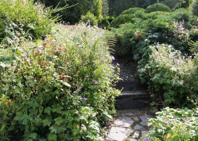 Into the conifer garden