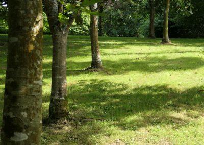 Oaks in summer