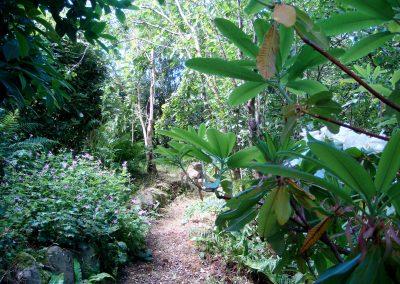 Summer Hydrangea path