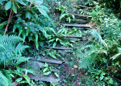 Summer Hydrangea steps